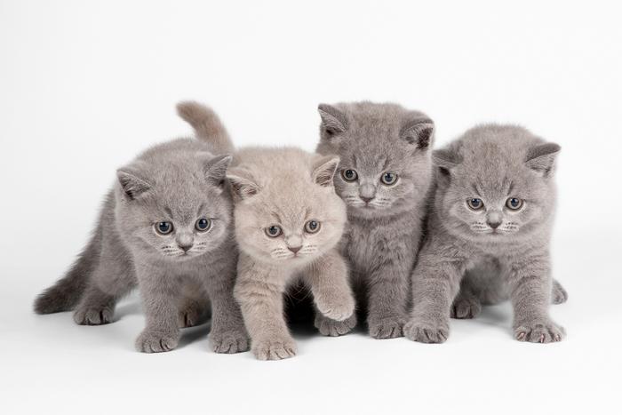 В Китае начинают массовую продажу клонированных котов